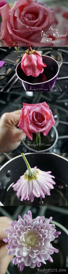 Wax Dipped Flowers How To Preserve A Rose With Wax Budget101com