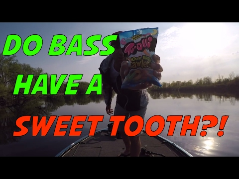 Will bass eat a candy worm bait? Catching a smallmouth bass with candy challenge!
