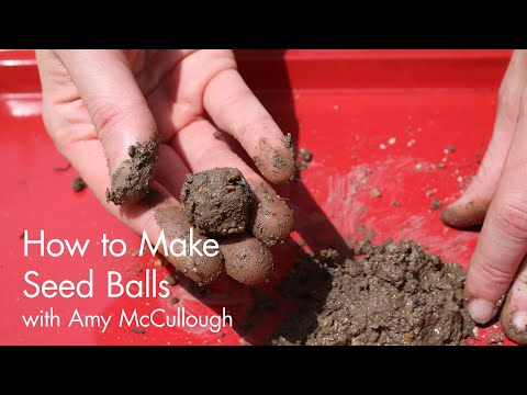 How to Make Seed Balls