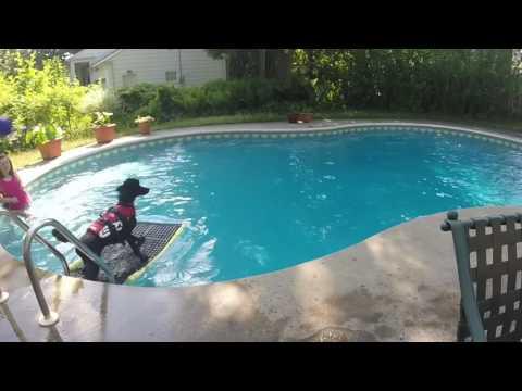 DIY Dog Swimming Ladder
