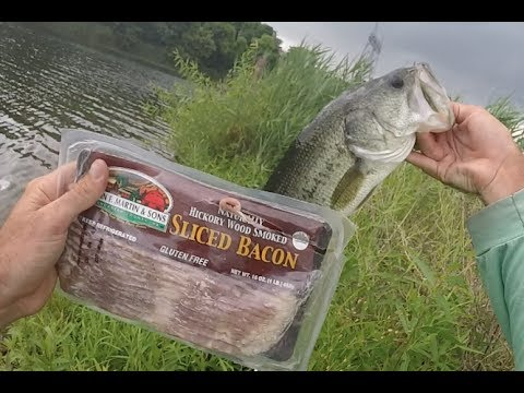 Drop Shotted Bacon Catches Bass, Crappie and HUGE BLUEGILL!