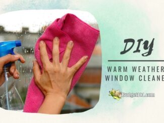DIY cornstarch window cleaner sm