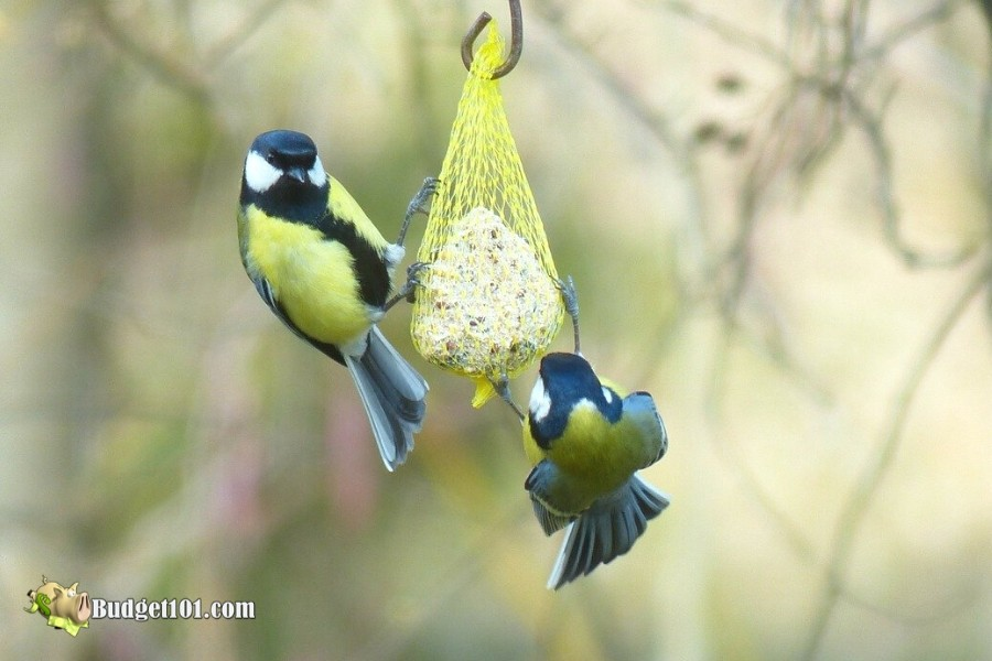 b101-gourmet-bird-food-balls