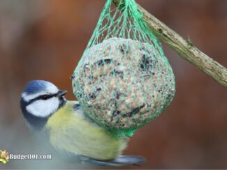 b101 gourmet bird food balls 5