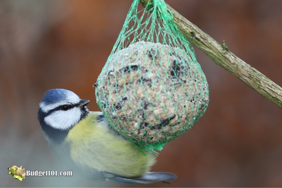 Gourmet Bird Food Balls