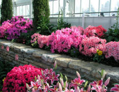 landscaping-gardening-inexpensively
