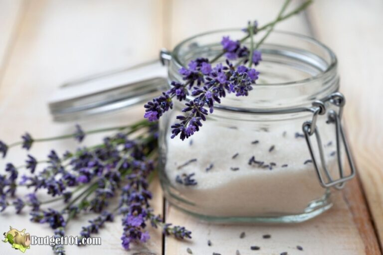 b101 lavender sugar scrub recipe