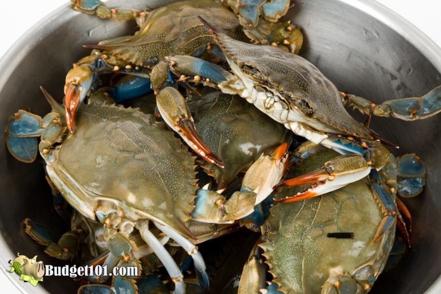 Crab Newburg over Old Bay Pasta