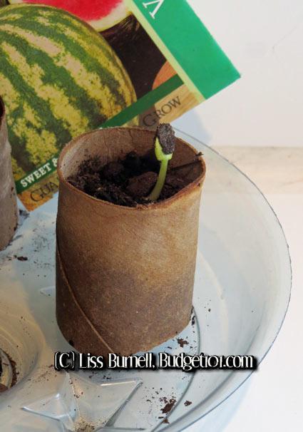 myo-biodegradable-seed-pots