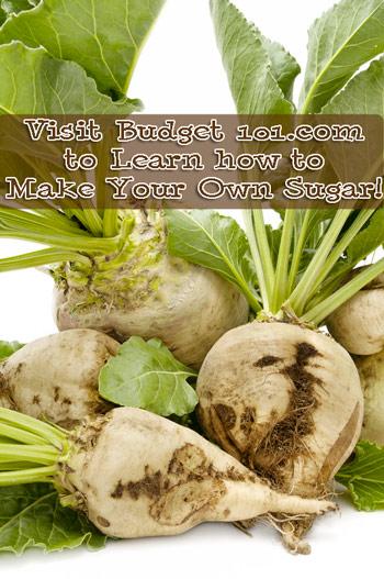 how-to-grow-sugar-beets-myo-sugar