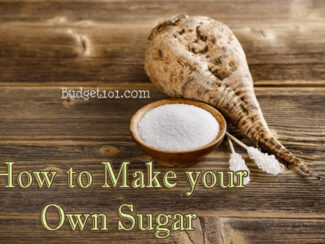 how to grow sugar beets myo sugar