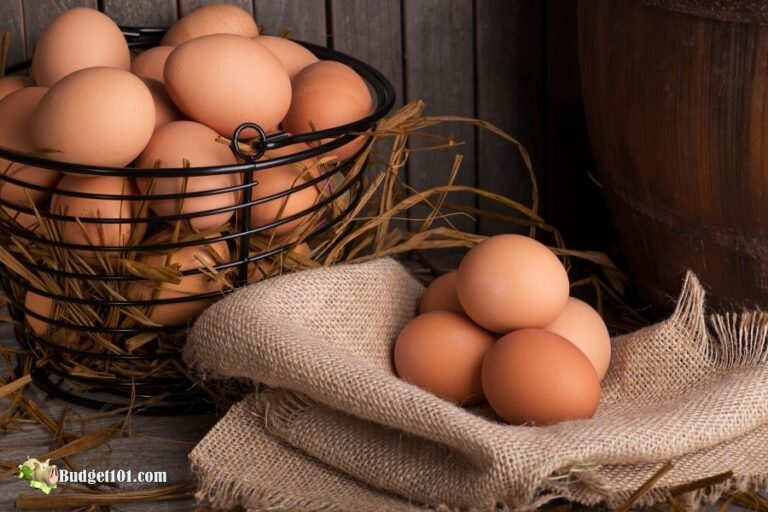 b101 eggs
