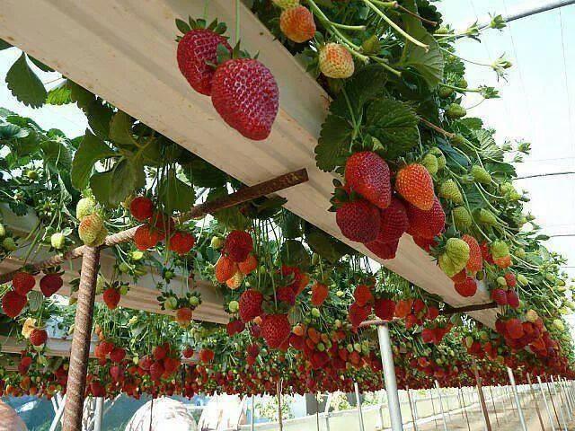 DIY Gutter Berries