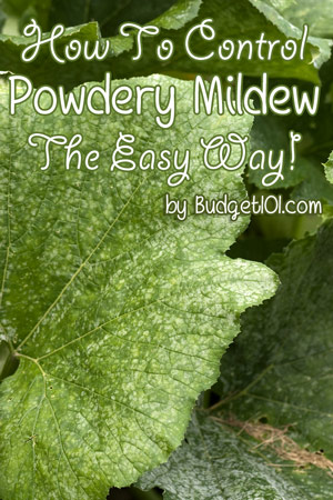how to control powdery mildew