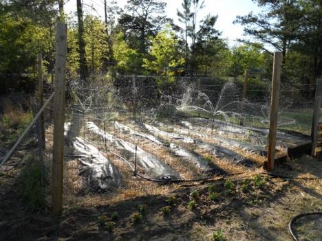 adventures-in-mound-gardening-2