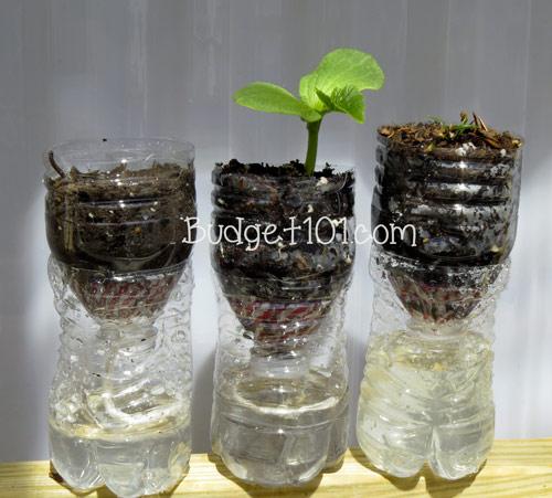 myo-self-watering-planters