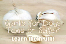 garlic for dogs the great debate