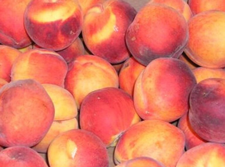 how to can prepare peaches for canning or freezing