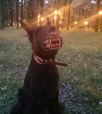 werewolf dog halloween props for fido