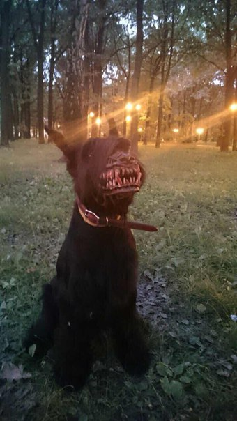 werewolf-dog-halloween-props-for-fido