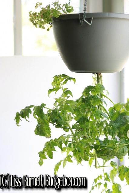 myo-upside-down-tomato-planter