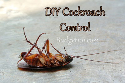 cockroach-control