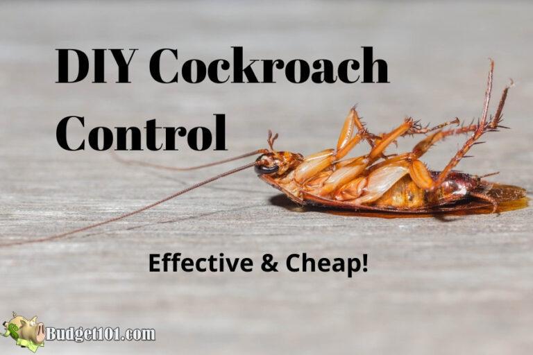 kill cockroaches dead