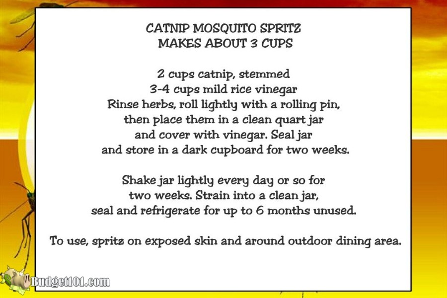b101-mosquito-catnip-recipe