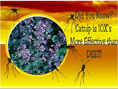 make-your-own-mosquito-repellent