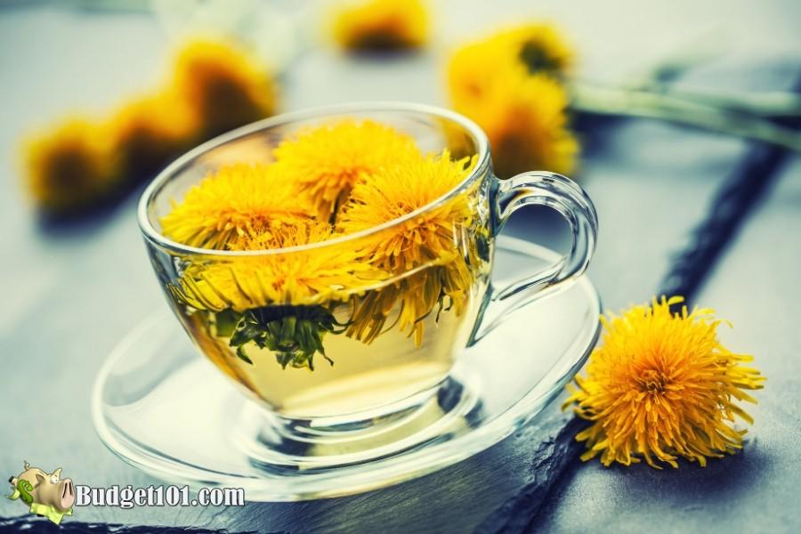 b101-foraging-wild-foods-dandelion-tea