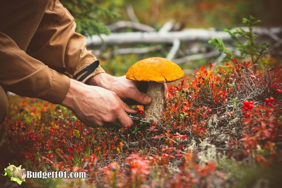How to Safely Forage for Wild Food