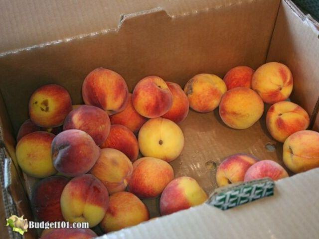 b101-peach-pie-filling-1