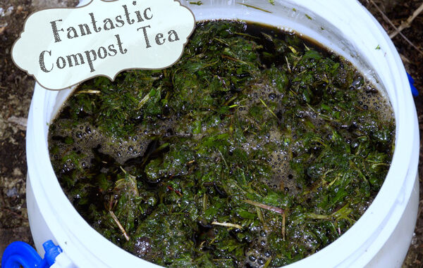 Homemade Compost or Manure Tea