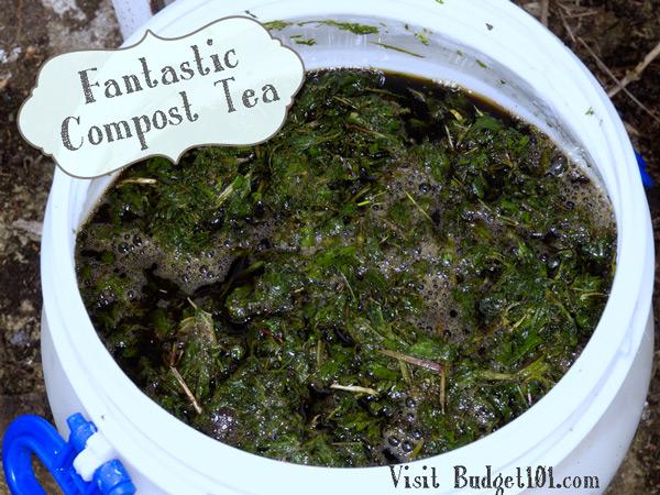 homemade-compost-tea
