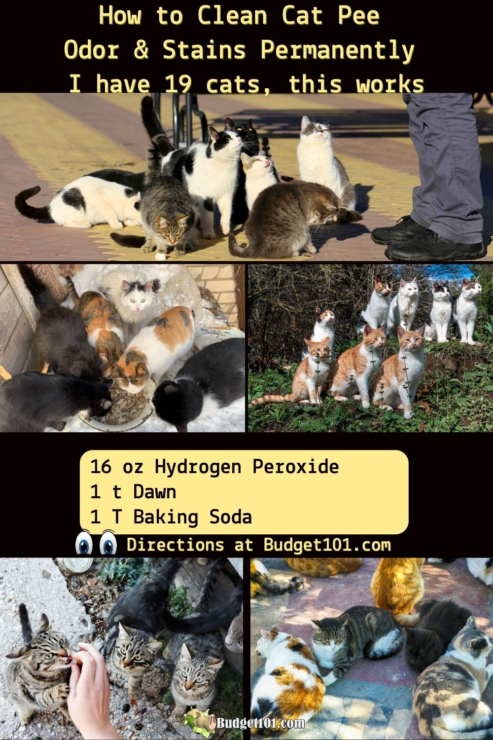 how to clean cat pee remove cat urine stains pin