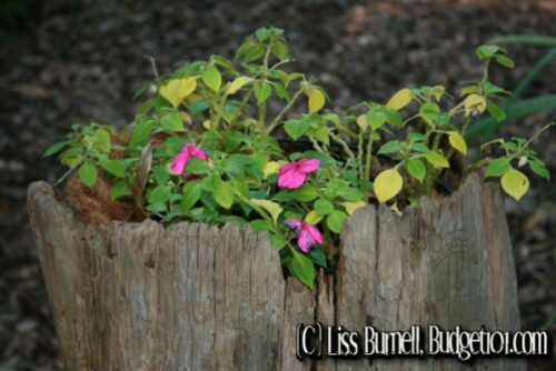 garden enhancements using what you have
