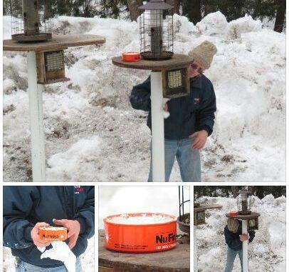 tips n tricks squirrel proof the birdfeeders