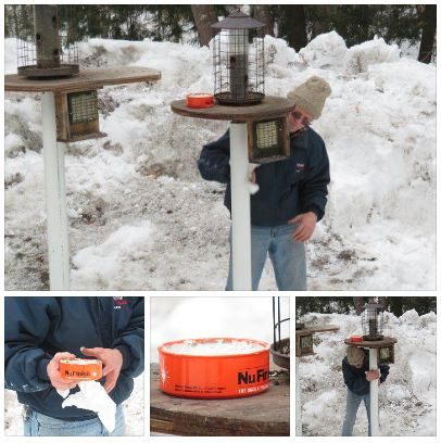 tips-n-tricks-squirrel-proof-the-birdfeeders