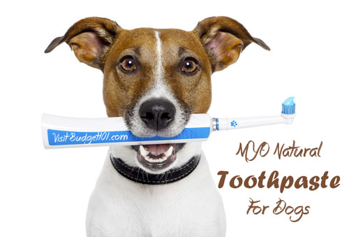 natural-toothpaste-for-dogs