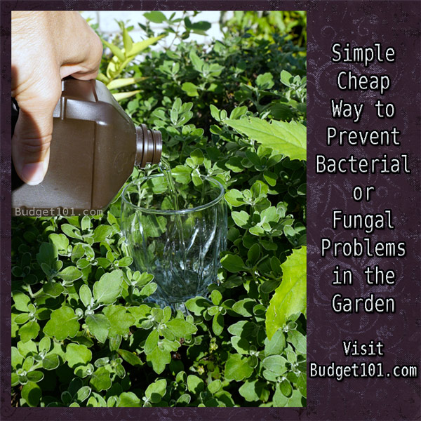 prevent bacterial or fungal problems on plants