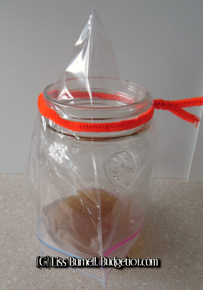How To Get Rid Of Fruit Flies & Prevent Reinfestation