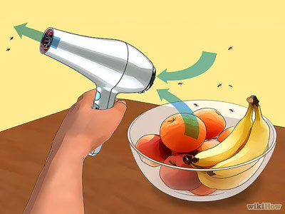 how-to-get-rid-of-fruit-flies-prevent-reinfestation