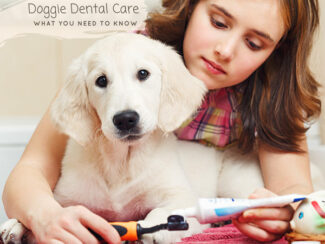 are you brushing your dogs teeth