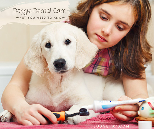 are-you-brushing-your-dogs-teeth