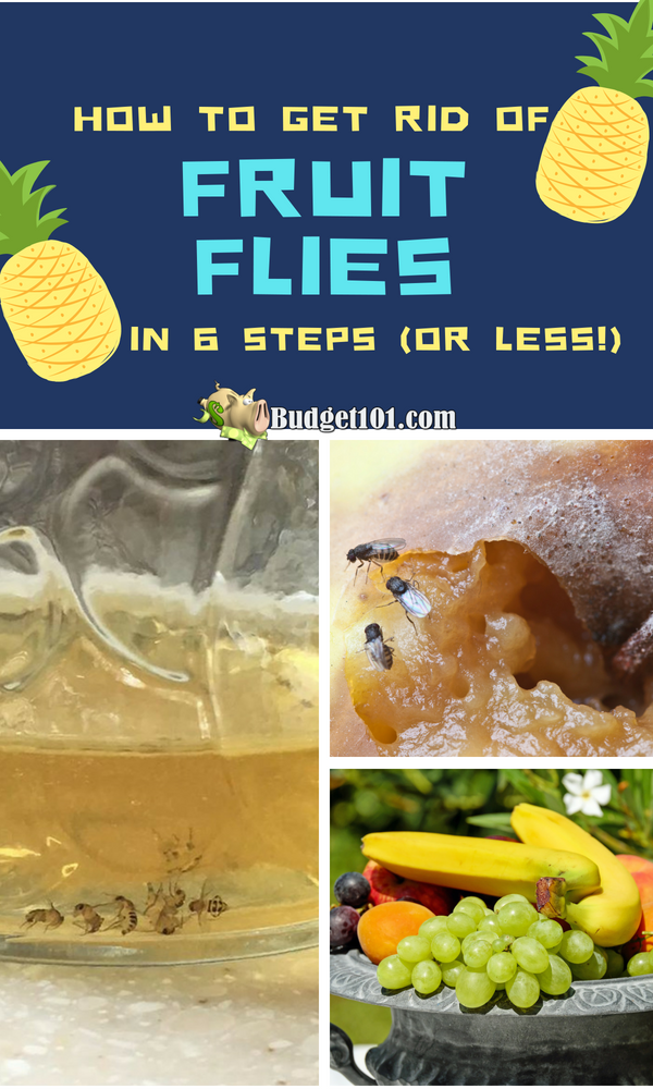 How To Get Rid Of Fruit Flies Prevent Reinfestation