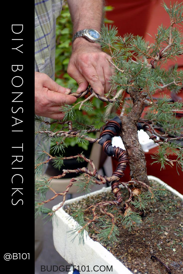 how-to-wire-bind-bonsai-trees