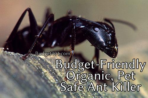 ant-killer