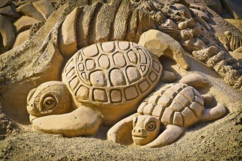 b101 turtle sand
