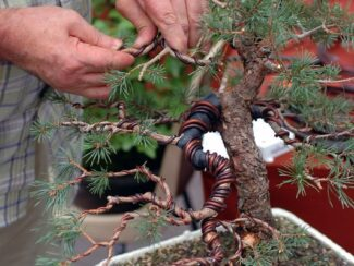 how to wire bind bonsai trees