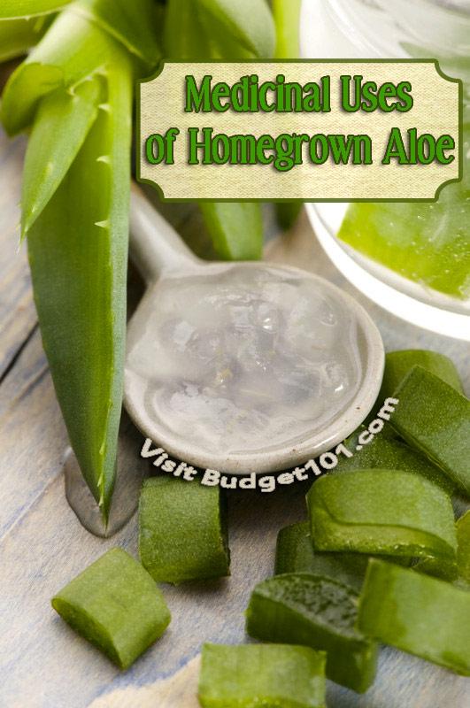 grow-aloe-vera-for-its-medicinal-properties
